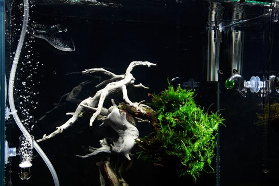 underwater-bonsai-makoto-azuma-4
