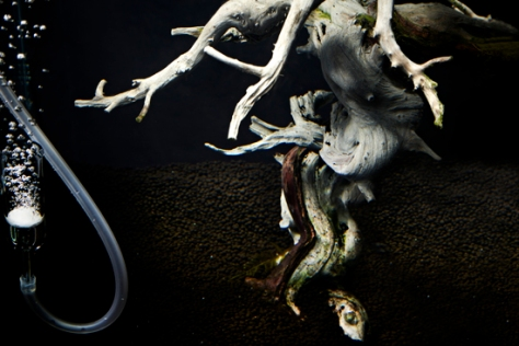 underwater-bonsai-makoto-azuma-6
