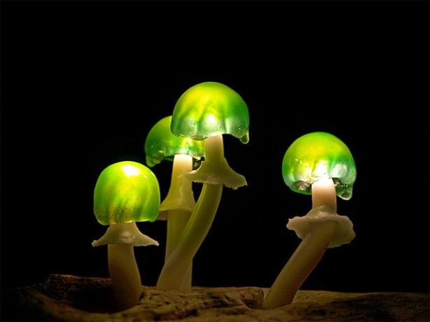 LED_Mushroom_Lights_Yukio_Takano_08