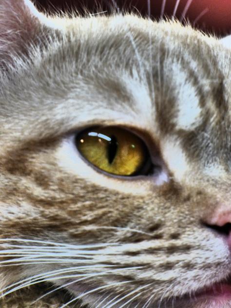 close up2