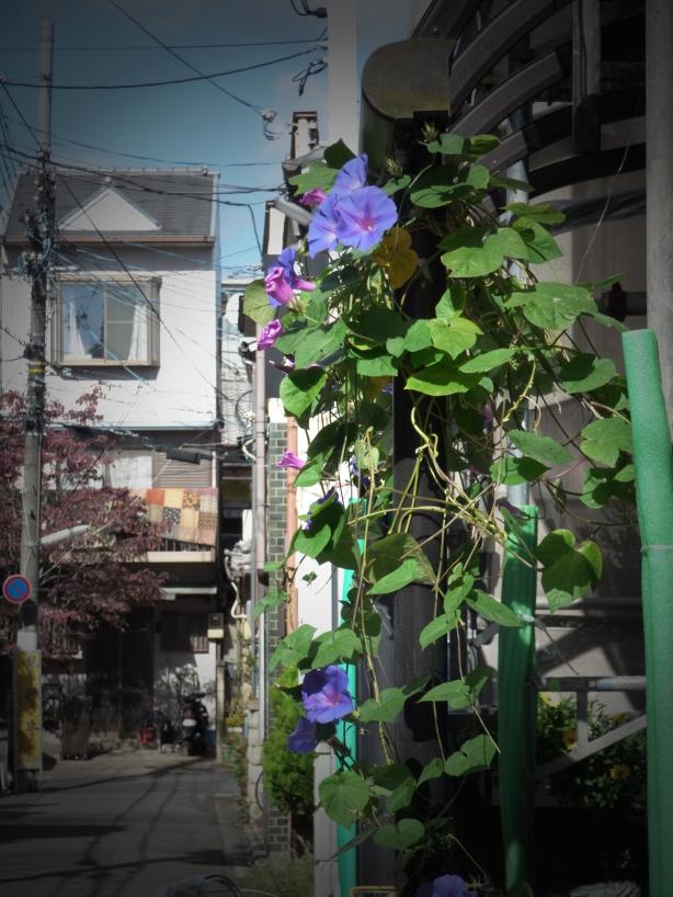 garden car.1